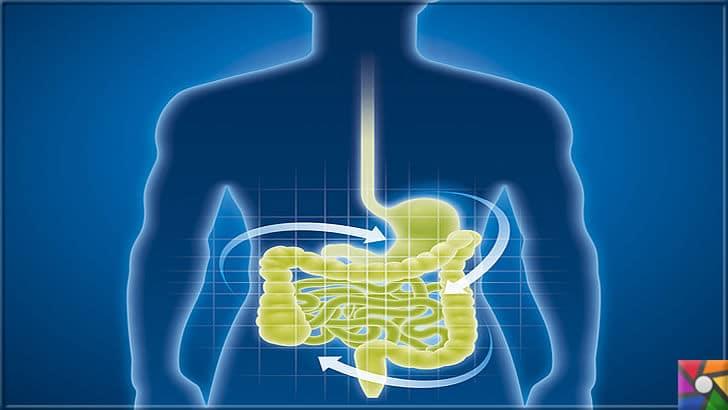 Parazit nedir? Parazitler nasıl oluşur? Parazitlerden Nasıl kurtulabiliriz? | Bağışıklık Sisteminin beyni Bağırsaklardır