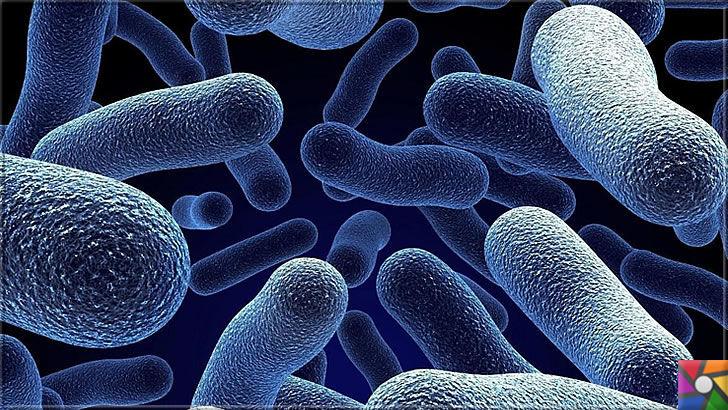Parazit nedir? Parazitler nasıl oluşur? Parazitlerden Nasıl kurtulabiliriz? | Bağırsaklarda Parazit içine giren yararlı bakterilerde vardır