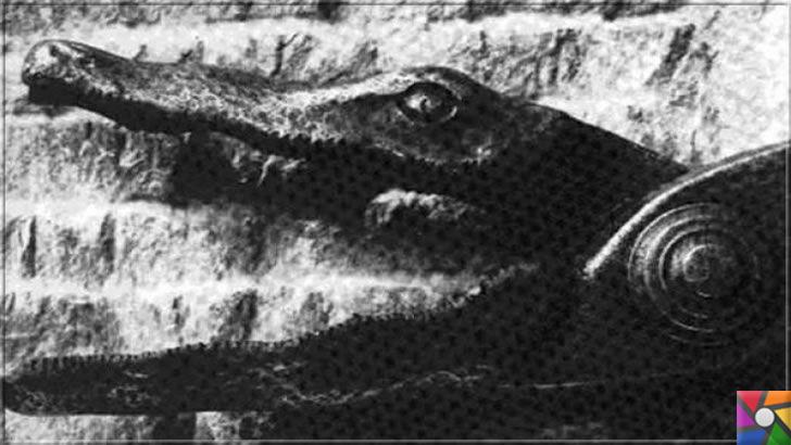 Ortaçağ Avrupa'sında yapılan insanlık dışı 10 işkence aleti ve yapılış şekli | Timsah Makası içinde dişlerde küçük jiletler var