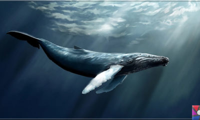 İnsanlar balinalar gibi 200 yaşına kadar yaşayabilecek mi? Bilim ne diyor?