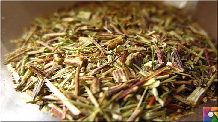 Rooibos Çayı zayıflatır mı? Rooibos Çayının yararları ve zararları nelerdir? | Rooibos Çayının fermente edilmemiş taze hali