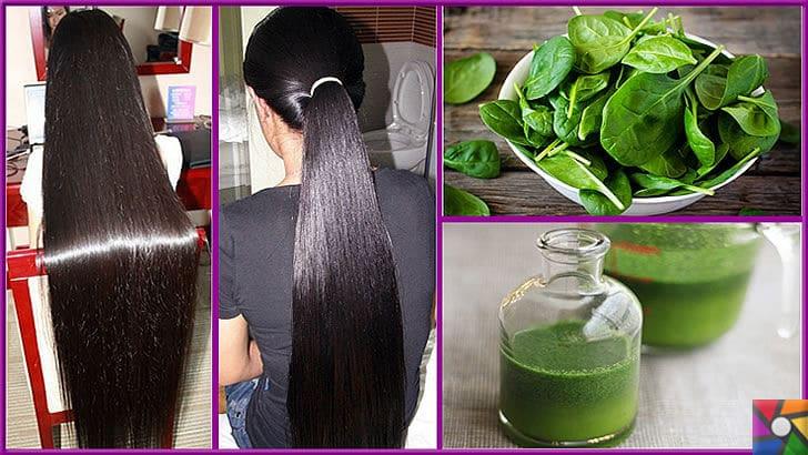 Saçların sağlıklı büyümesi için Ispanak ile yapılan 3 saç bakım kürü | Ispanaklı saç kürlerinin etkisi, bir aydan sonra görülmeye başlar