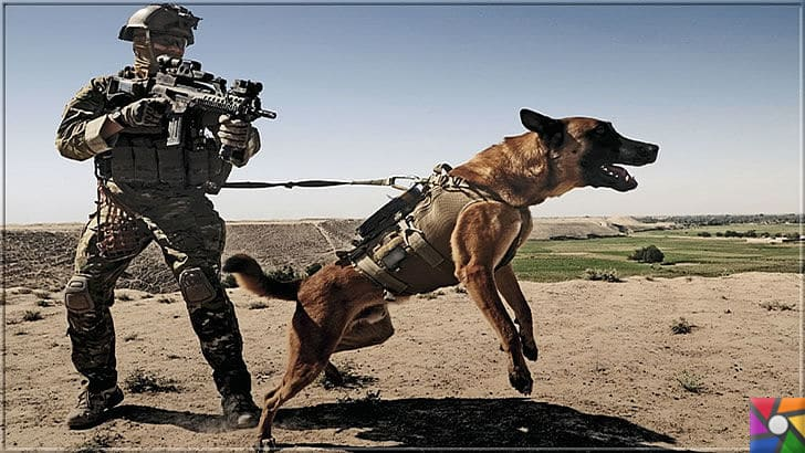 Alman Kurdu olarak bilinen Alman Çoban Köpeğinin harika özellikleri | Alman Çoban Köpeği (Alman Kurdu) askerlerin yardımcıları olarak görev yapıyor