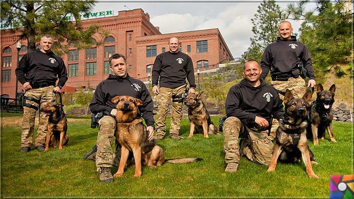 Alman Kurdu olarak bilinen Alman Çoban Köpeğinin harika özellikleri | Alman Çoban Köpeği (Alman Kurdu) eğitime açık olup, bir çok yerde eğitim kurumları vardır