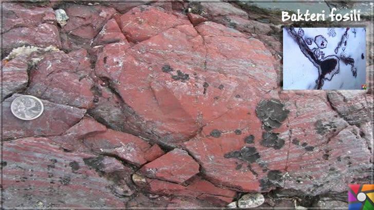Dünyayı yaşanabilir hale getiren hayat kaynağı oksijen nasıl oluştu? | Siyanobakteri (Cyanobacteria) fosilinin Kanada'daki Rocky kayalıklarında bulunduğu yer. 4,26 milyar yaşında