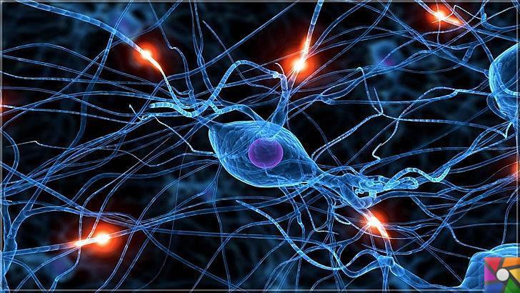 Nörotransmitter Nedir? Sinir sisteminde kaç çeşit Nörotransmitter var?
