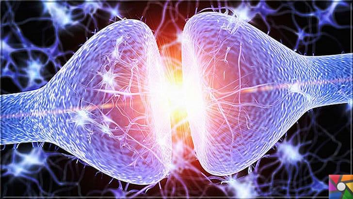 Nörotransmitter Nedir? Sinir sisteminde kaç çeşit Nörotransmitter var? | İki nöron arasında bilgi akışı kimyasal bağlarla elektriksel sinyallerle geçer