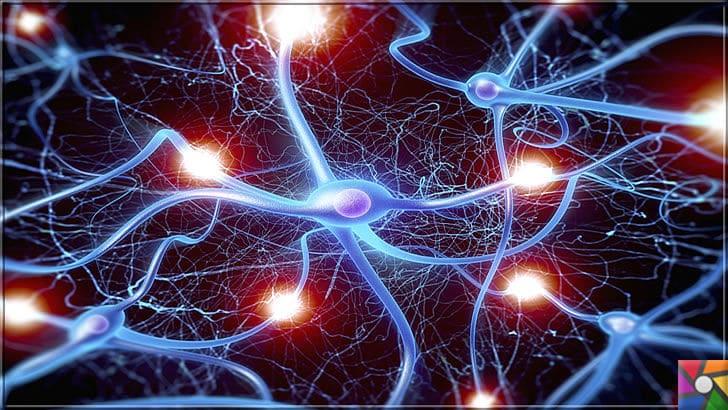 Serotonin nedir? Serotonini arttırmak için en iyi 10 doğal kaynak nedir? | Sinir Hücreleri yani Nöronlar birbirlerinden bilgi alması için Serotonini gibi Norotransmitterleri kullanır.