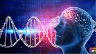 Dopamin Nedir? Dopamin eksikliği nasıl anlaşılır? Dopamin nasıl arttırılır?