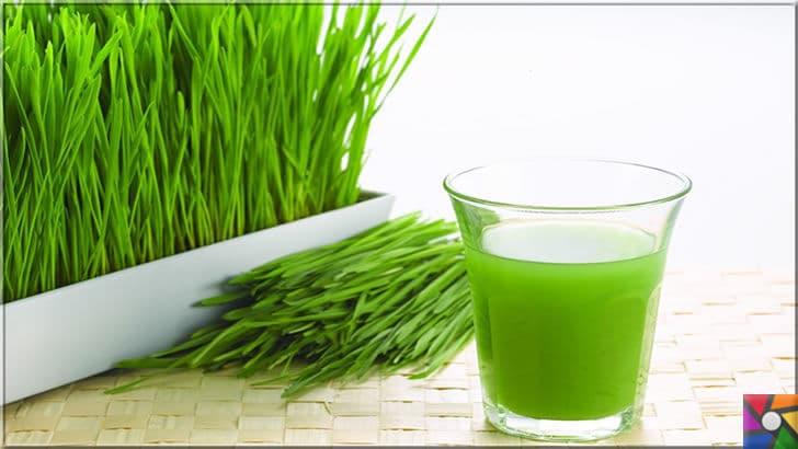 Evde doğal enerji içeceği nasıl yapılır? Kolay ve hızlı 20 enerji içeceği tarifi | Buğday çimini evde geniş uzun saksılarda sizde yetiştirebilirsiniz