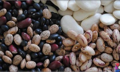 Neden Fasulye yemeliyiz? Lif deposu Fasulyenin yararları ve zararları