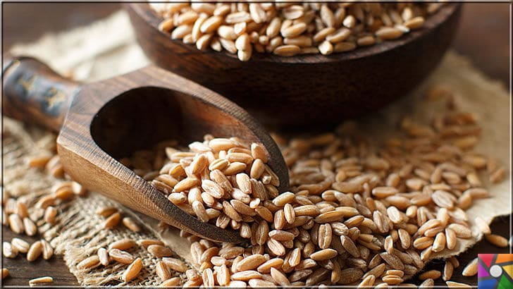 Neden buğday yemeliyiz? Buğdayın sağlık açısından bilinmeyen yönleri | Buğday taneleri