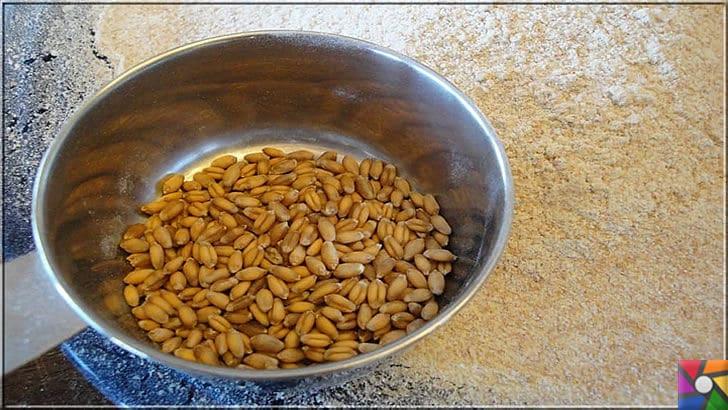 Neden buğday yemeliyiz? Buğdayın sağlık açısından bilinmeyen yönleri | Buğday çekirdeği ayrıştırılmadan öğütülürse tam buğday un olur