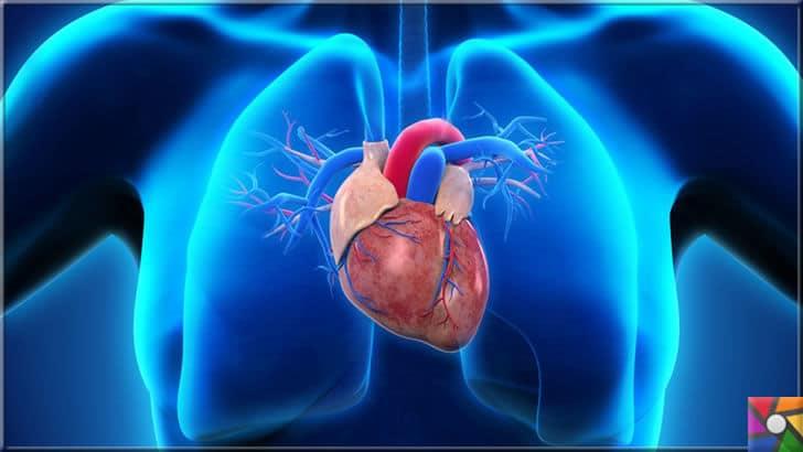 Kalp naklinin yerine alabilen Kalp yaması nedir? Kalp yaması nasıl çalışır? | Ortalama 300 gramlık bir ağırlığı olan Kalp harika bir organ