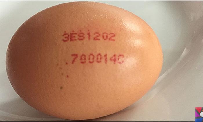 Yumurtanın üzerindeki kodlar ne işe yarar? Yumurtanın iyisi nasıl anlaşılır?