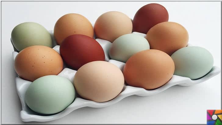 Yumurtanın üzerindeki kodlar ne işe yarar? Yumurtanın iyisi nasıl anlaşılır? | Yumurtanın rengi onun daha kaliteli olduğunu göstermez