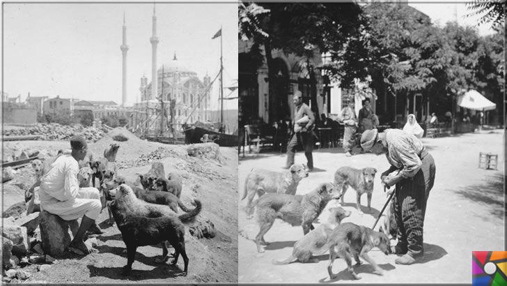 Osmanlı devrinde İstanbul'un tarihinde yaşanan 3 sıradışı yasak | Osmanlı zamanında İstanbullular ve sokak köpekleri
