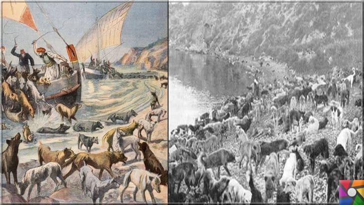 Osmanlı devrinde İstanbul'un tarihinde yaşanan 3 sıradışı yasak | Osmanlı'da Köpeklerin Sürgünü