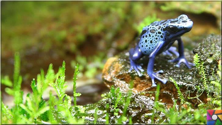Paludaryum nedir? Paludaryum nasıl oluşur? Paludaryum nasıl yapılır? | Paludaryumun olmazsa olmazı mavi kurbağa