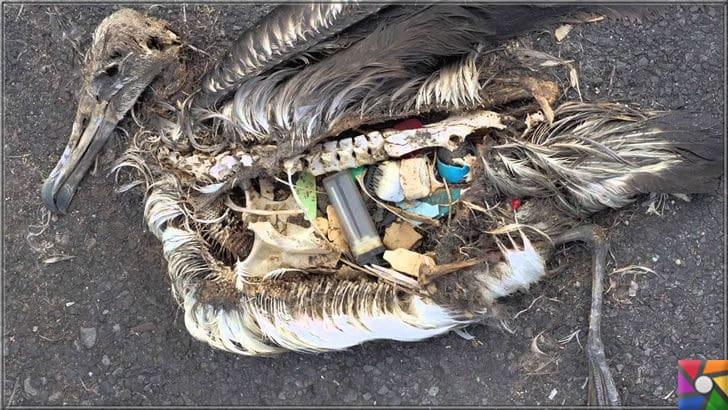 Çevre düşmanı Plastik sektörünün dolu dizgin yükselişi devam ediyor! | Deniz kuşlarının çoğunun ölümünde, yediği plastik parçalardan dolayı kaynaklanır