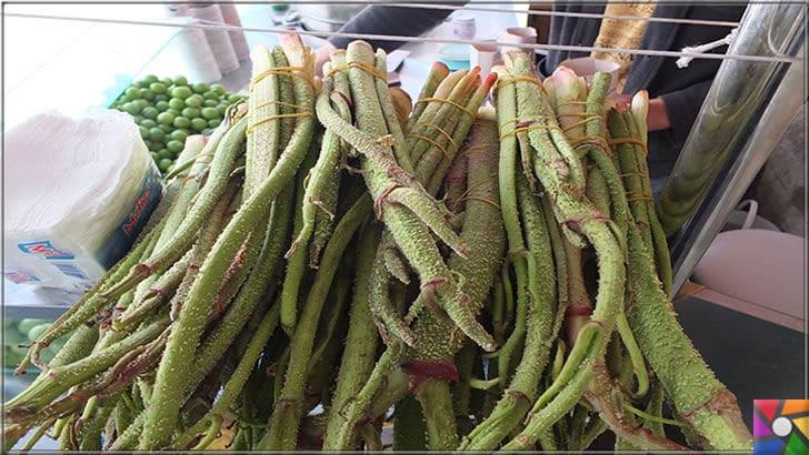 Uçkun (Reun Ribes) nedir? Uçkunun faydaları ve zararları nelerdir? | Semt pazarlarında bu bitkiyi görebilirsiniz