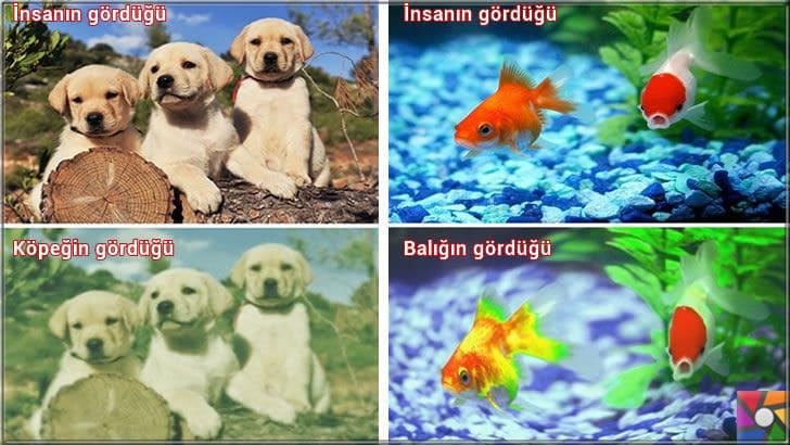 Hayvanlar nasıl görür? Hayvanların gözleri birbirinden farklı mı? | Köpekler nasıl görür? Akvaryum balıkları nasıl görür?