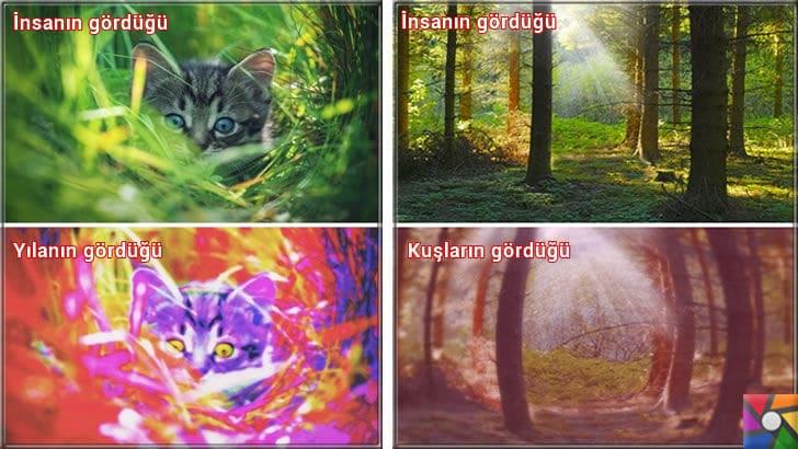 Hayvanlar nasıl görür? Hayvanların gözleri birbirinden farklı mı? | Yılanlar nasıl görür? Kuşlar nasıl görür?