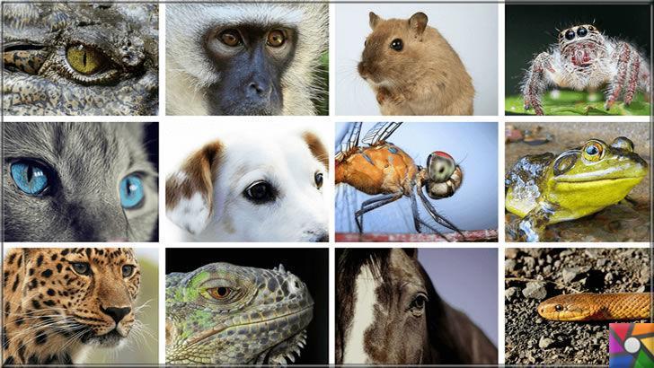 Hayvanlar nasıl görür? Hayvanların gözleri birbirinden farklı mı?