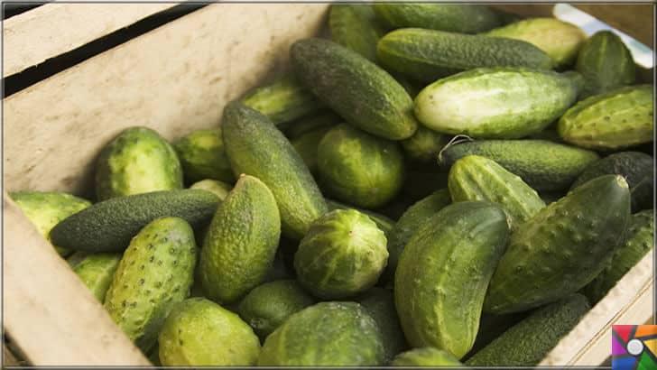 Salatalığın insan sağlığı üzerinde bilinmeyen 8 müthiş faydası | Salatalık turşusunu yaparken organik olan salatalıkları kullanmalı