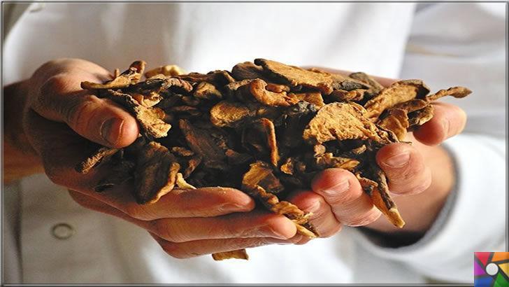 Hindiba Kahvesi Nedir? Hindiba Kahvesi Nasıl Yapılır? | Hindiba kurusu