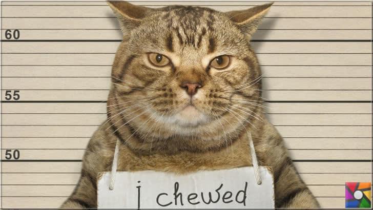 Bazı kediler doğuştan huysuz ve asabidir
