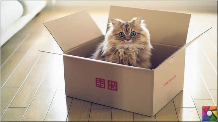 Kediler kutularla oynamayı çok sever
