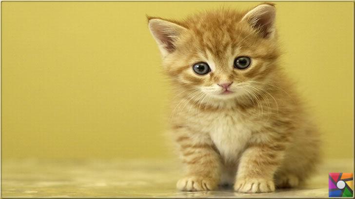 Kedilerin en çok yaptığı 12 davranışın bilimsel açıklaması