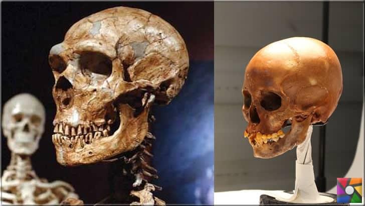 Kesik ve cilalı kafatasları da bulunuyor