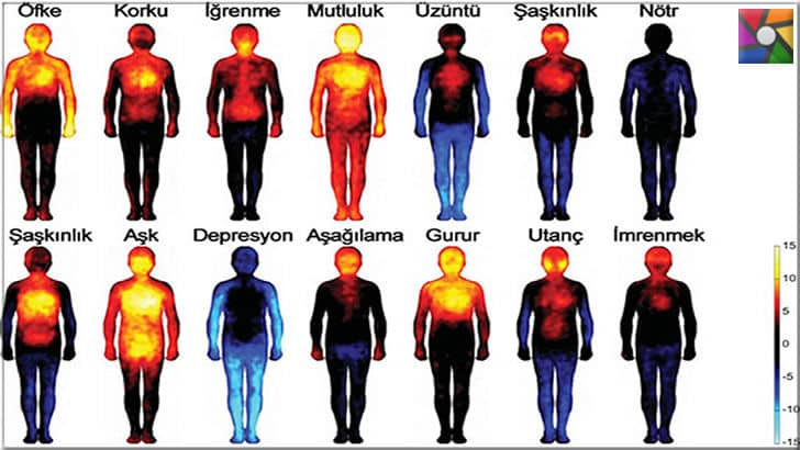 Değişen vücut sıcaklıklarının anlamları