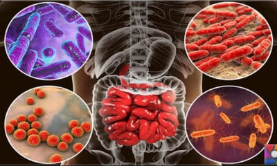 Bağırsak bakterileri bağışıklık sistemi için neden önemli?
