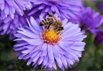Böceklerin en zekisi Arılar hesaplama yapabilir mi?