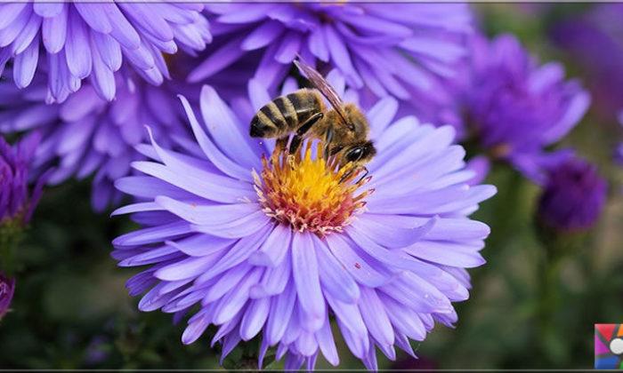 Böceklerin en zekisi Arılar matematik işlemlerini yapabilir mi?