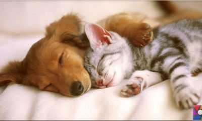 Hayvanlar uykusuz ne kadar yaşar?