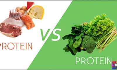 Hayvansal protein bitkisel proteinden daha mı yararlı?