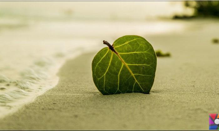 İklim değişikliği oksijen kaynağımız okyanusları öldürüyor