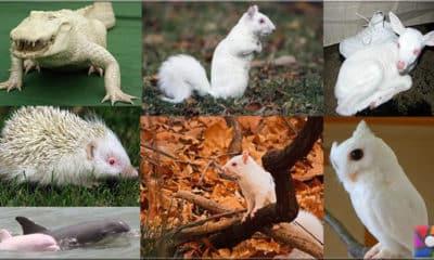 Albinizm nedir? Albino nedir? Albino hayvanlar nasıl yaşar?