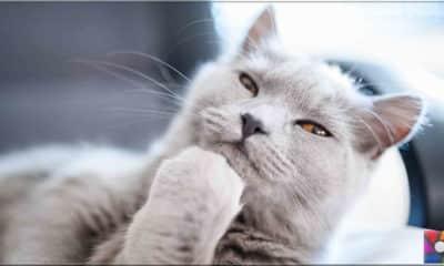 Kedileri tanımak için 6 ipucu