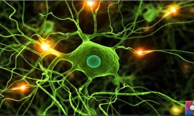 Mikroglia nedir? Mikrogliaların beyindeki işlevleri nelerdir?