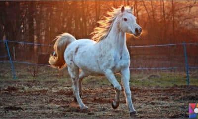 At nasıl evcilleşti? İnsanlık tarihinde atlar neden önemli?