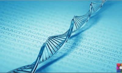 En iyi veri belleği DNA mı yoksa MolBits mi?