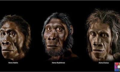 İnsan evrimi günümüzde de devam ediyor mu?