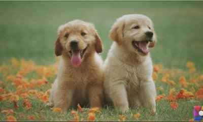 Köpeklerin gülümsemesi gerçek mi?