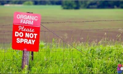 Organik tarım iklime daha çok zarar veriyor