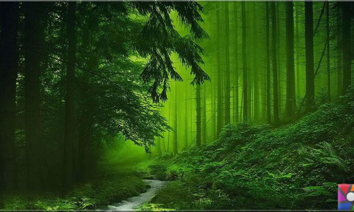 Doğadan uzak yaşayanlar neden orman banyosu yapmalı?